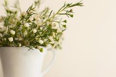 Primavera en una taza Imágenes de archivo libres de regalías