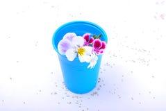 Primavera en una taza plástica Imagen de archivo