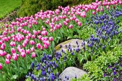Primavera en Vancouver Fotografía de archivo libre de regalías