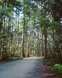 Primavera enorme Forest Landscape Foto de archivo