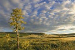 primavera Entre Apulia e Basilicata: paisagem montanhosa com campos de milho verdes Italy imagens de stock