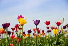 A primavera estala para fora Imagem de Stock