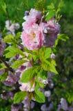 Primavera, fiore fotografie stock libere da diritti