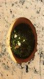 Primavera, fiori Giardino privato in un piccolo mondo foto nessuno Fotografia Stock Libera da Diritti
