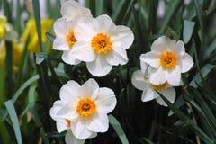 Primavera in fioritura 2019 V fotografia stock