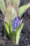 Primavera, floración Fotografía de archivo
