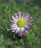 Primavera, floración Foto de archivo libre de regalías