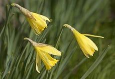 Primavera, floración Fotos de archivo libres de regalías