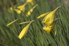 Primavera, floración Foto de archivo