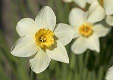 Primavera, floración Fotos de archivo