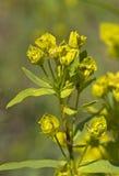 Primavera, floración Imágenes de archivo libres de regalías