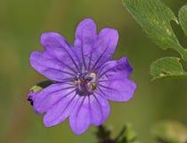 Primavera, floración Imagen de archivo libre de regalías