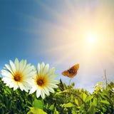 Primavera floral Fotografía de archivo libre de regalías