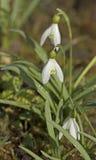 Primavera, floreciendo Imagen de archivo libre de regalías