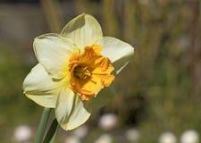 Primavera, floreciendo Fotos de archivo libres de regalías