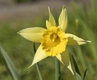 Primavera, floreciendo Fotografía de archivo libre de regalías