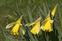 Primavera, floreciendo Imagen de archivo