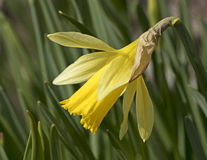 Primavera, floreciendo Fotografía de archivo