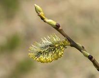 Primavera, floreciendo Fotos de archivo