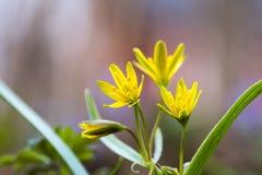 A primavera floresce o close up Imagens de Stock