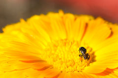 Primavera, fondo de la flor del verano Fotos de archivo libres de regalías