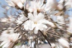 Primavera Forest Abstract Swirl, fuoco selettivo Fotografie Stock Libere da Diritti