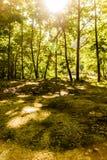 Primavera Forest Of Aegean Region immagini stock libere da diritti
