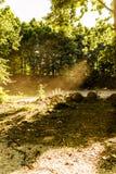 Primavera Forest Of Aegean Region fotografie stock