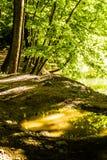 Primavera Forest Of Aegean Region fotografie stock libere da diritti