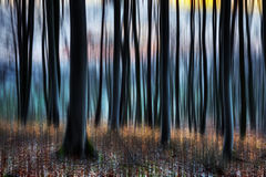 Primavera Forest Sunset foto de archivo libre de regalías