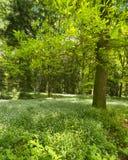In primavera foresta fotografie stock libere da diritti