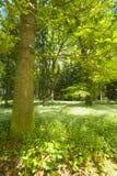 In primavera foresta fotografia stock libera da diritti
