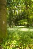 In primavera foresta fotografia stock