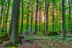 Primavera Forrest Sunset fotografía de archivo libre de regalías