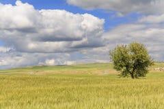 primavera Fra la Puglia e la Basilicata: paesaggio della molla con il giacimento di grano L'Italia Immagine Stock