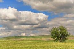 primavera Fra la Puglia e la Basilicata: paesaggio della molla con il giacimento di grano L'Italia Fotografia Stock Libera da Diritti