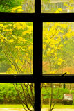 Primavera fuera de la ventana Foto de archivo