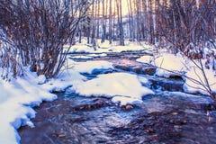 Primavera fugada en invierno Fotografía de archivo