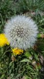 Primavera Fuzzies Foto de archivo libre de regalías