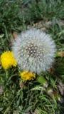 Primavera Fuzzies Fotografía de archivo libre de regalías