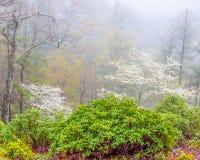 Primavera in GA del nord Montagne Immagini Stock
