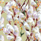 Primavera, gatito-sauce floreciente, acuarela Foto de archivo libre de regalías