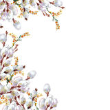Primavera, gatito-sauce floreciente, acuarela Imagenes de archivo