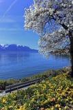 Primavera a Ginevra o il lago Leman, Montreux, Svizzera immagini stock libere da diritti