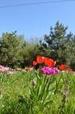 Primavera Gran día soleado foto de archivo