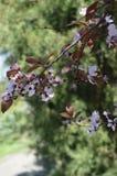 Primavera Gran día soleado fotos de archivo libres de regalías