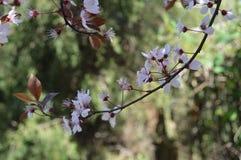 Primavera Gran día soleado imagen de archivo