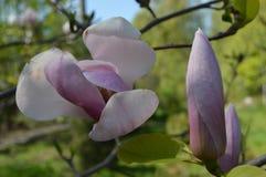 Primavera Gran día soleado imágenes de archivo libres de regalías