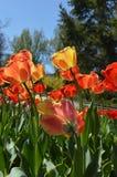 Primavera Gran día soleado foto de archivo libre de regalías