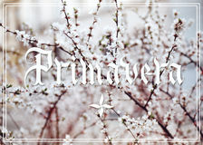 Primavera hand lettering. With blossom flowers on background. Parallel pen calligraphy Royalty Free Stock Photos